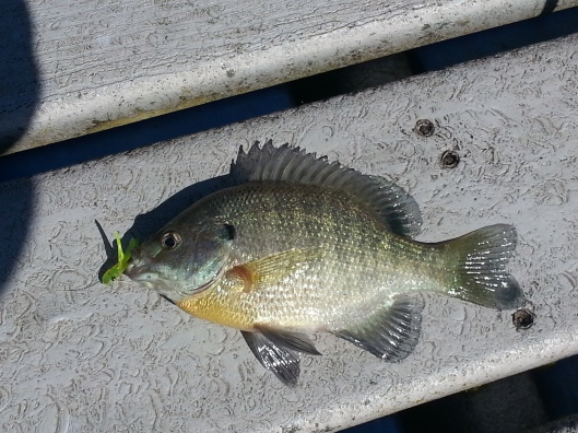 Bluegill Fishing at Silver Lake